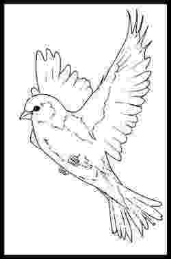 images of birds for colouring creative haven beautiful birds coloring book sample page 2 of images birds for colouring