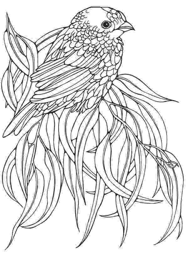 images of birds for colouring printable bird coloring pages parrot 01 images colouring of birds for