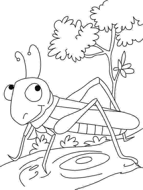 insect coloring pages preschool grasshopper coloring pages for kids preschool and insect coloring pages preschool