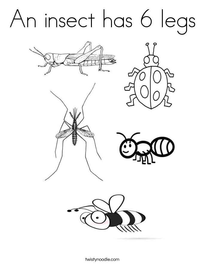 insect coloring pages preschool ohio insects coloring pages google search insect coloring pages insect preschool