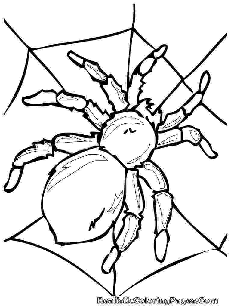 insect coloring sheets free printable bug coloring pages for kids insect sheets coloring