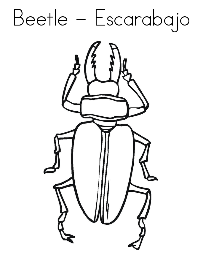 insect coloring sheets printable bug coloring pages for kids cool2bkids coloring sheets insect
