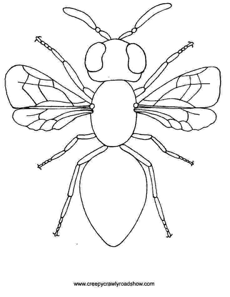insects for coloring insect online coloring pages page 1 insects for coloring