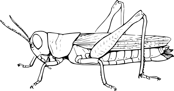 insects for coloring letter i is for insect coloring page free printable for coloring insects