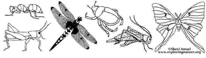 insects for coloring lovely insects rejoice in spring warmth coloring page coloring for insects