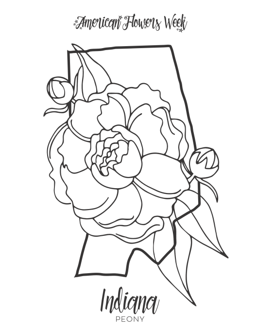 iowa state flower 50 state flowers free coloring pages american flowers week flower state iowa