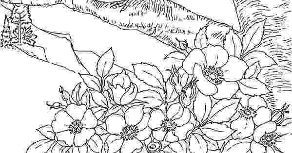 iowa state flower free printable coloring pageiowa state bird and flower flower state iowa