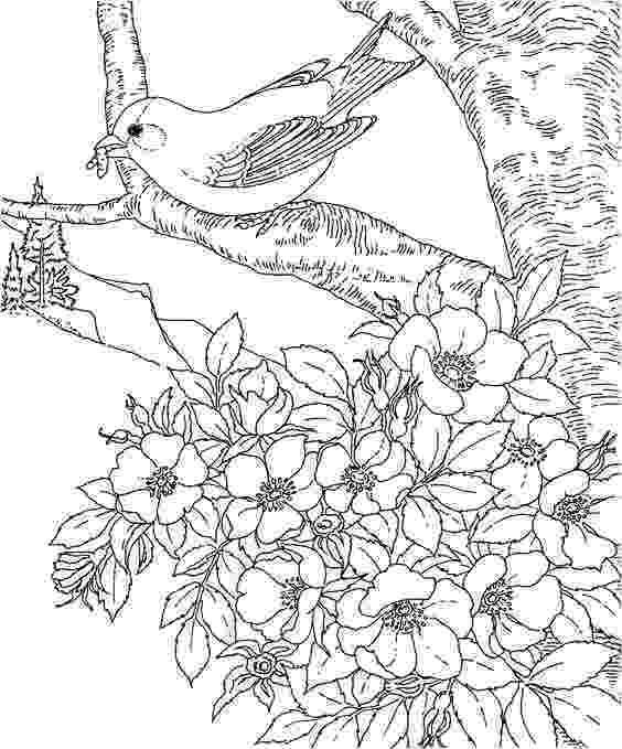iowa state flower goldfinch iowa state and iowa on pinterest iowa flower state