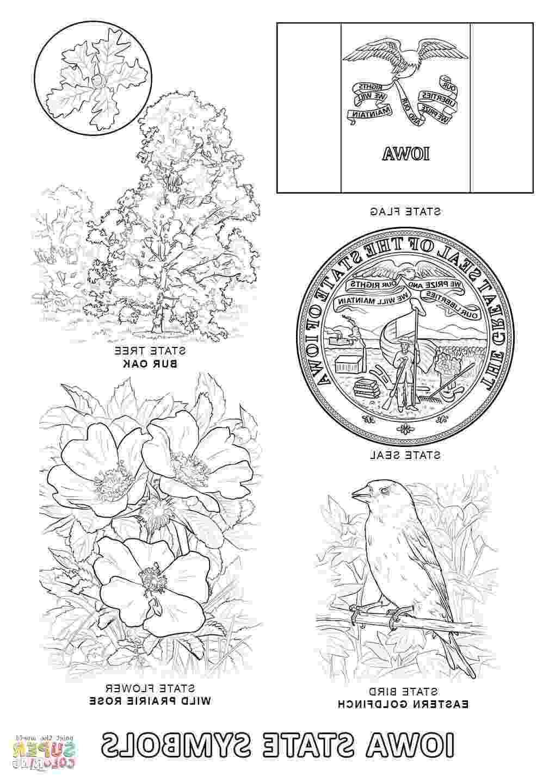 iowa state flower hd iowa state symbols coloring page design flower iowa state