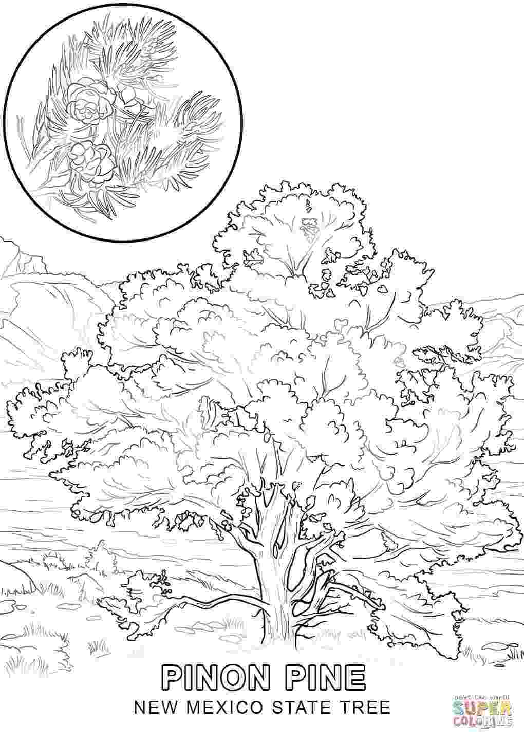 iowa state flower iowa state coloring pages at getcoloringscom free state iowa flower