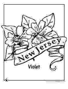 iowa state flower iowa state flower coloring page wild prairie rose usa flower state iowa