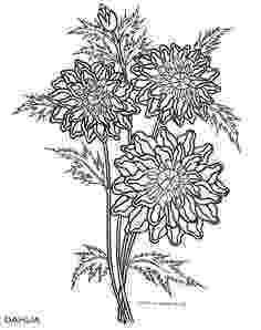 iowa state flower iowa state flower coloring page wild prairie rose usa iowa flower state 1 1