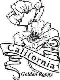 iowa state flower iowa state flower coloring page wild prairie rose usa iowa state flower 1 1