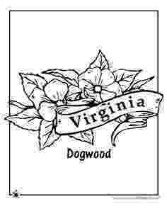 iowa state flower iowa state flower coloring page wild prairie rose usa state flower iowa