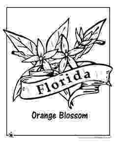 iowa state flower iowa state flower coloring page wild prairie rose usa state iowa flower 1 1
