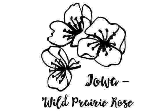 iowa state flower state flower iowa wild prairie rose svg cut file by iowa flower state