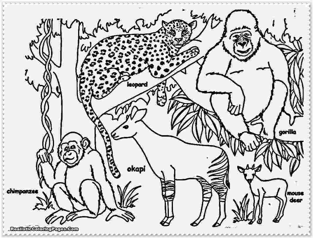 jungle animals coloring pages jungle safari coloring pages download and print for free pages jungle coloring animals
