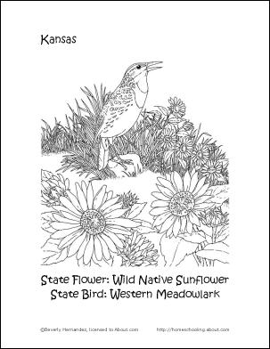 kansas state flower kansas coloring page at getdrawingscom free for kansas flower state