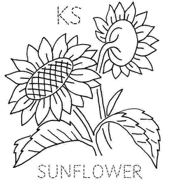 kansas state flower state flower quilt sunflowers kansas and embroidery flower kansas state