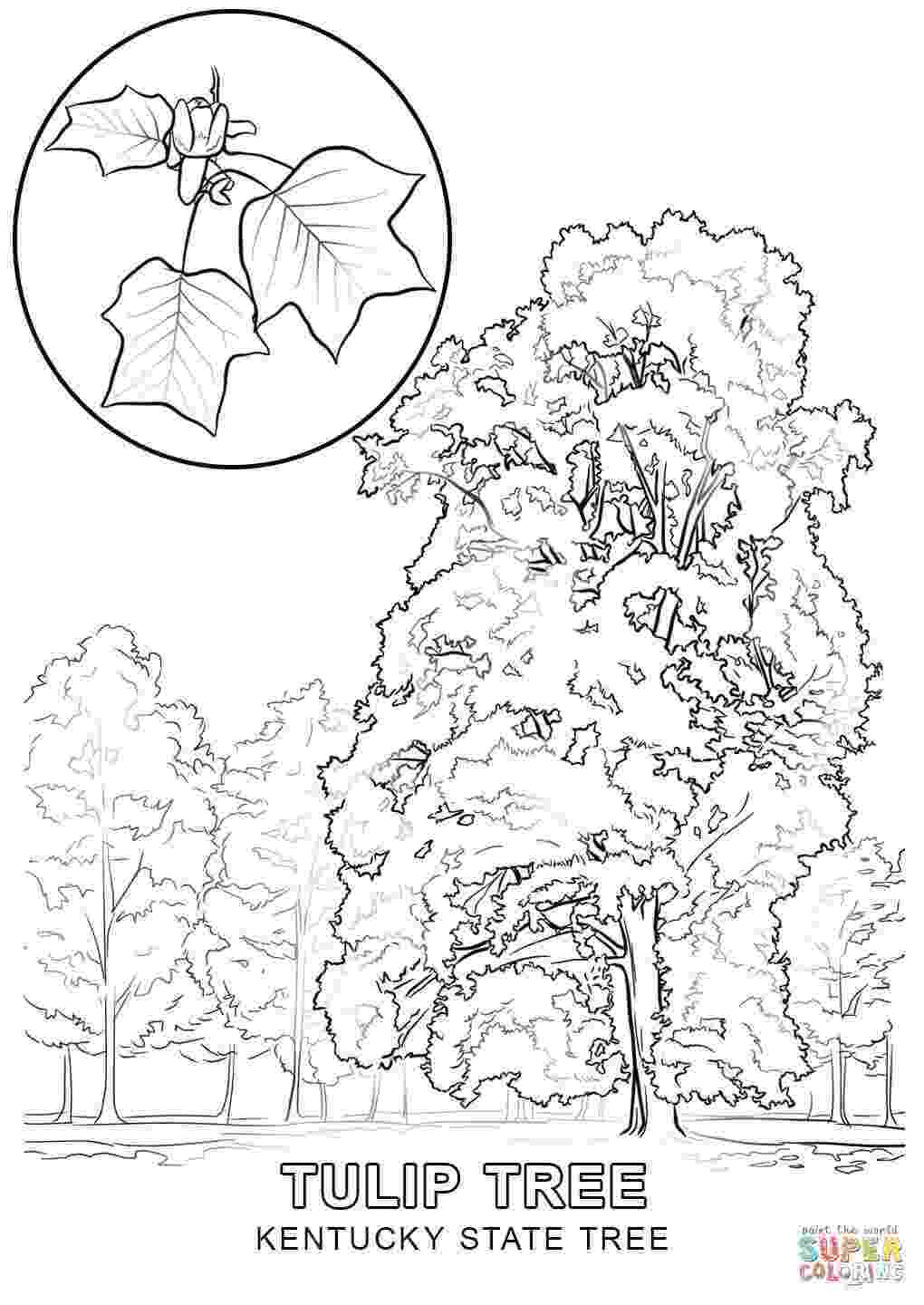 kentucky flag coloring page kentucky coloring pages printables kentucky state coloring kentucky page flag