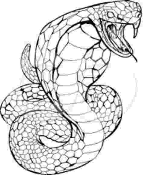 king cobra coloring pages king cobra coloring page free printable coloring pages pages coloring king cobra