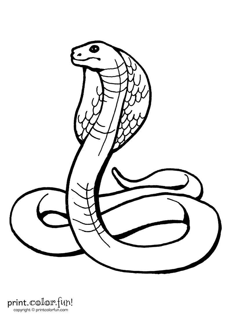 king cobra coloring pages king cobra coloring page print color fun pages king cobra coloring