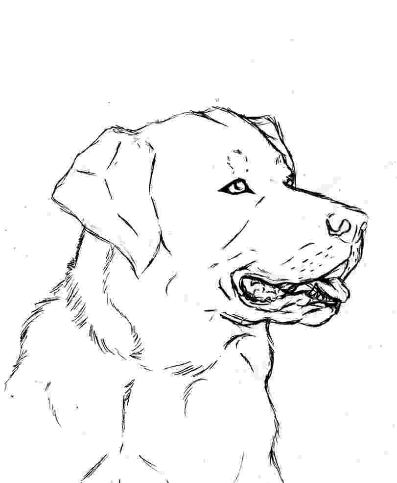 labrador coloring pages 35 dog coloring pages breeds bones and dog houses coloring pages labrador