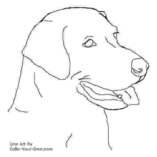 labrador coloring pages labrador coloring page educationcom pages labrador coloring
