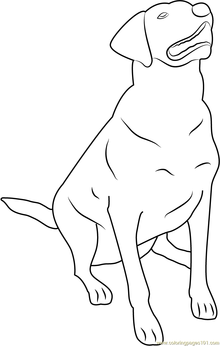 labrador coloring pages labrador coloring pages to download and print for free labrador pages coloring
