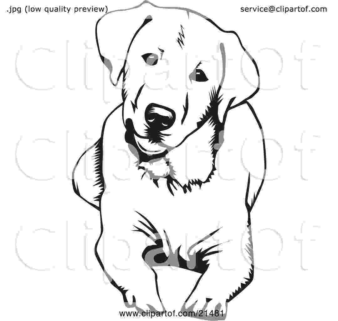 labrador coloring pages labrador retriever by bornofchocolate on deviantart labrador pages coloring