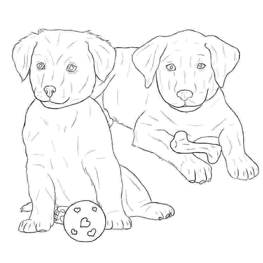 labrador coloring pages the best free labrador drawing images download from 455 labrador coloring pages
