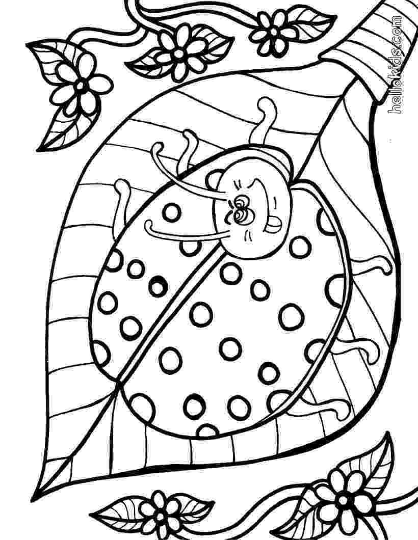ladybird colouring page free printable ladybug coloring pages for kids ladybird page colouring