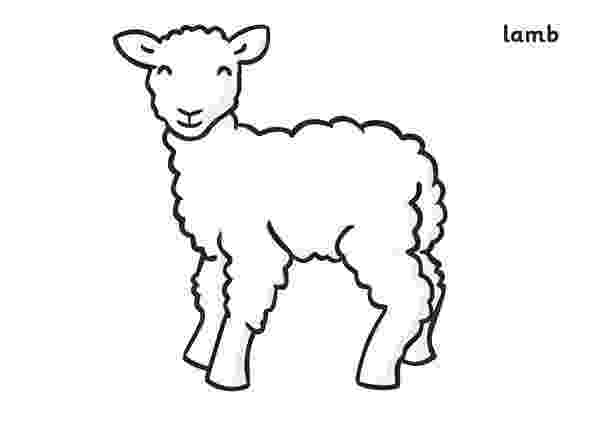 lamb color free printable sheep coloring pages for kids color lamb
