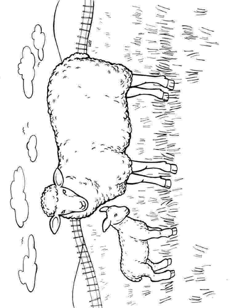 lamb color free sheep drawings for kids download free clip art free color lamb