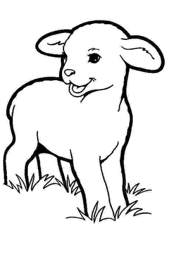 lamb color lamb coloring pages getcoloringpagescom color lamb