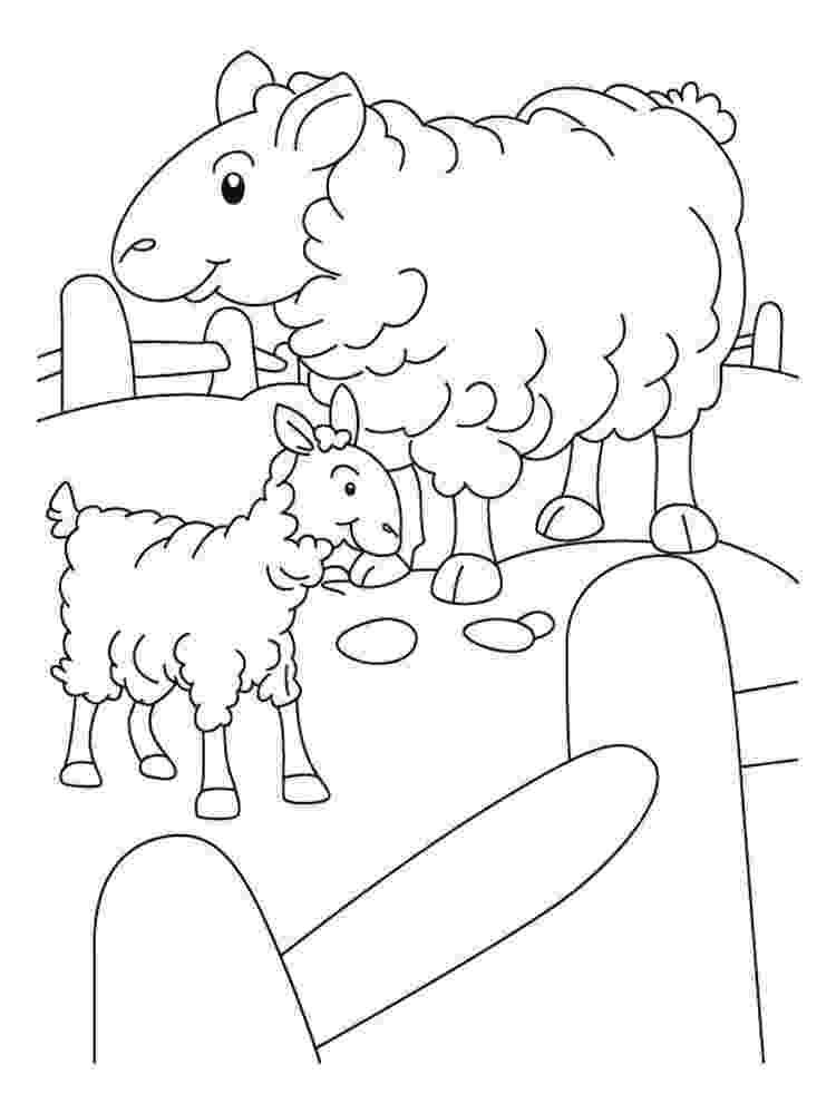 lamb color lamb colouring page color lamb