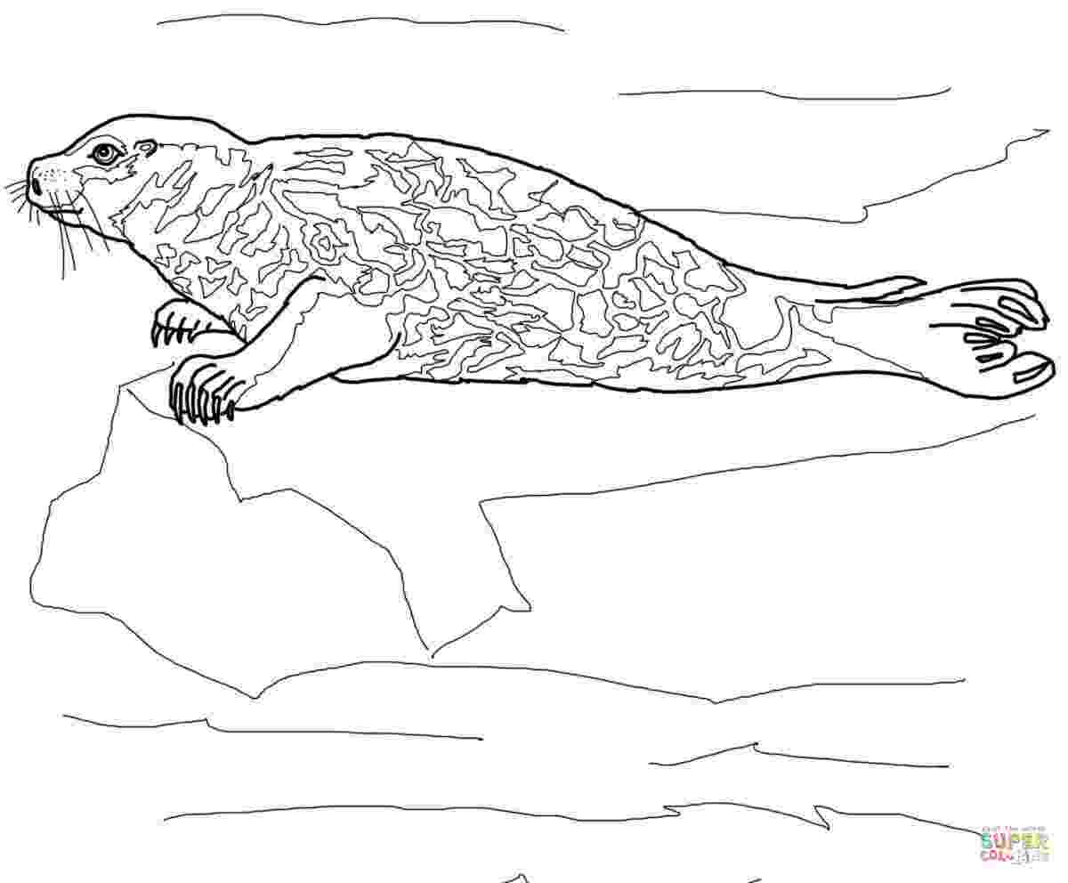 leopard seal coloring pages leopard seal coloring pages download and print for free coloring pages seal leopard
