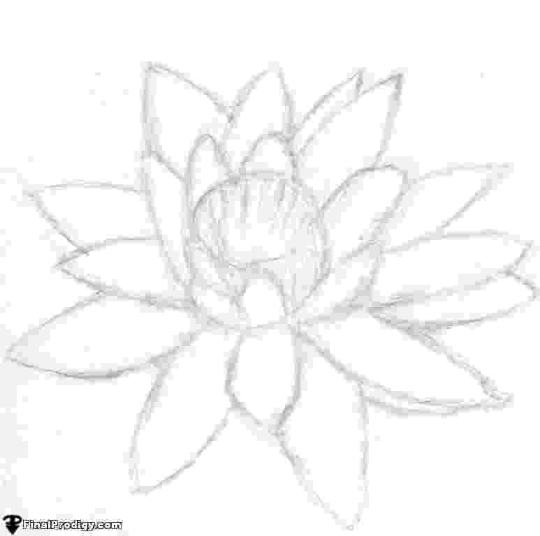 lily sketch 1000 images about flowers drawings of lily on pinterest sketch lily