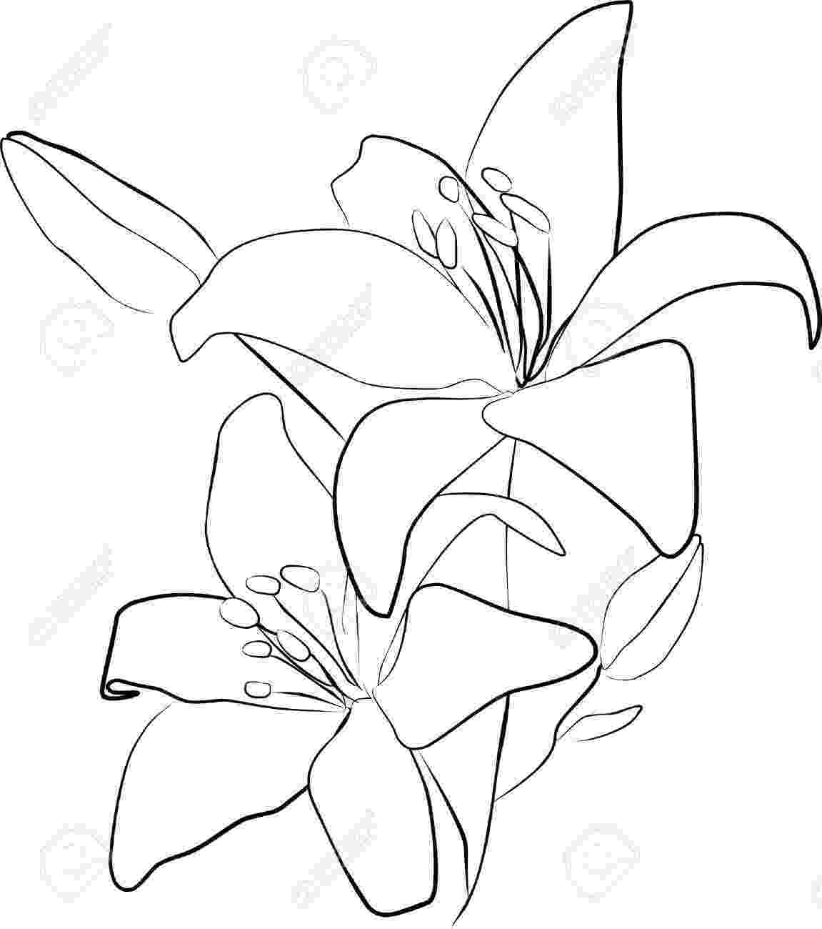 lily sketch 5 shading how to draw a lily howstuffworks sketch lily