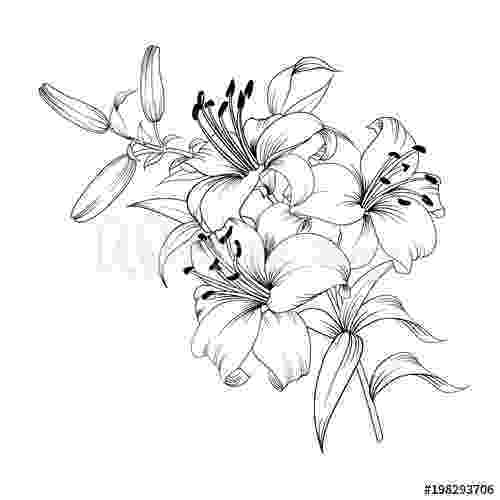 lily sketch dead lily flower google search lilies drawing lilly lily sketch