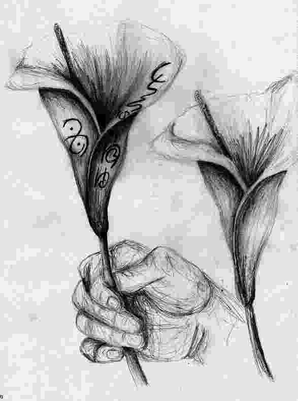 lily sketch drawings of lilies and drawings on pinterest lily sketch