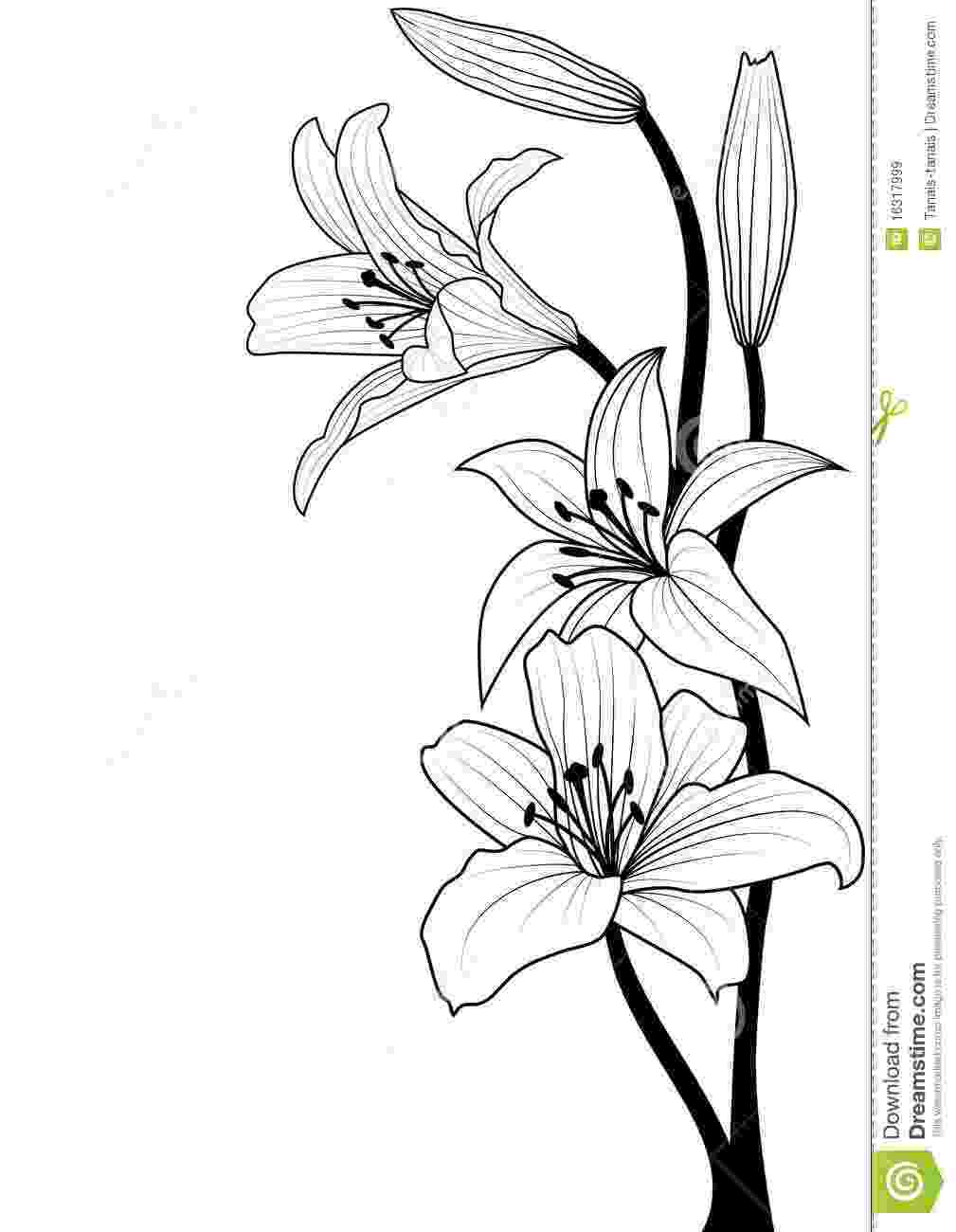 lily sketch how to draw a lily step by step flowers pop culture sketch lily
