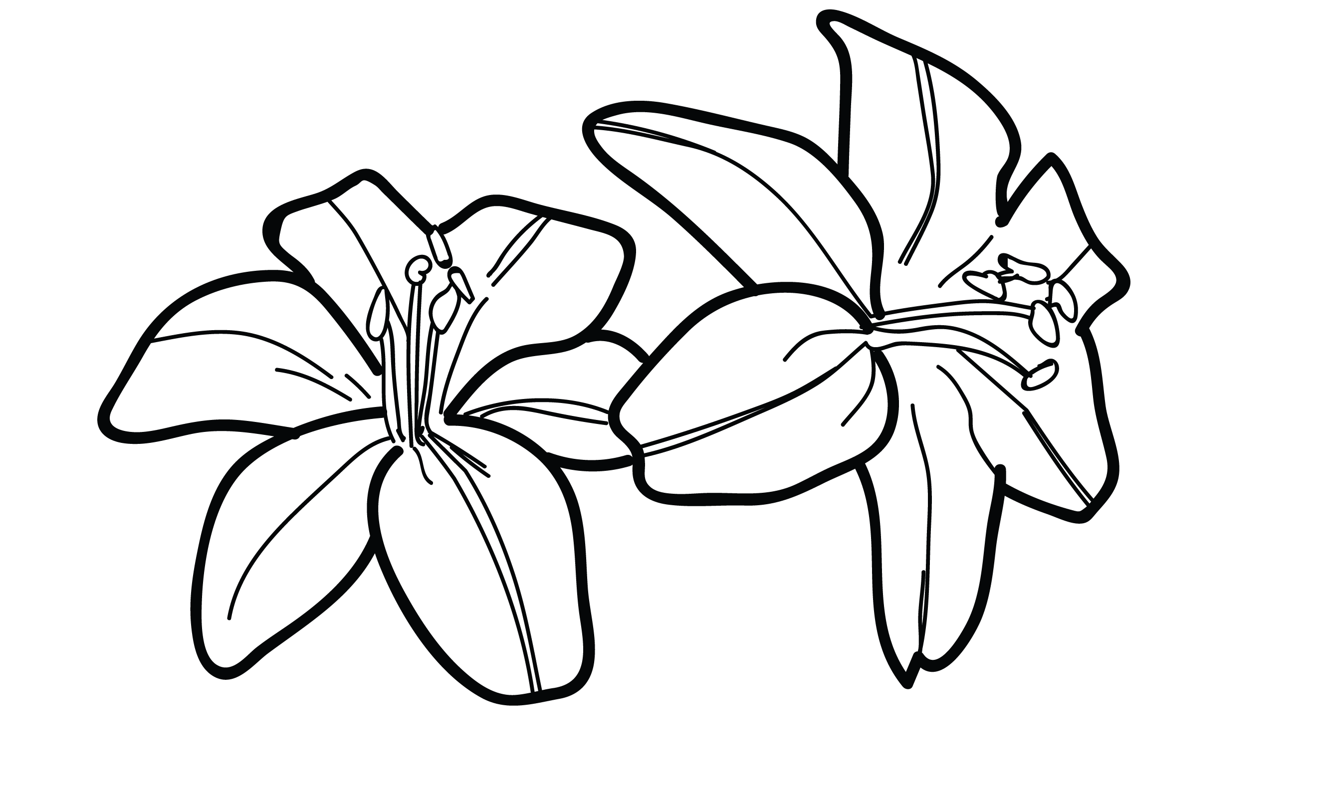 lily sketch how to draw a stargazer lily step by step flowers pop sketch lily