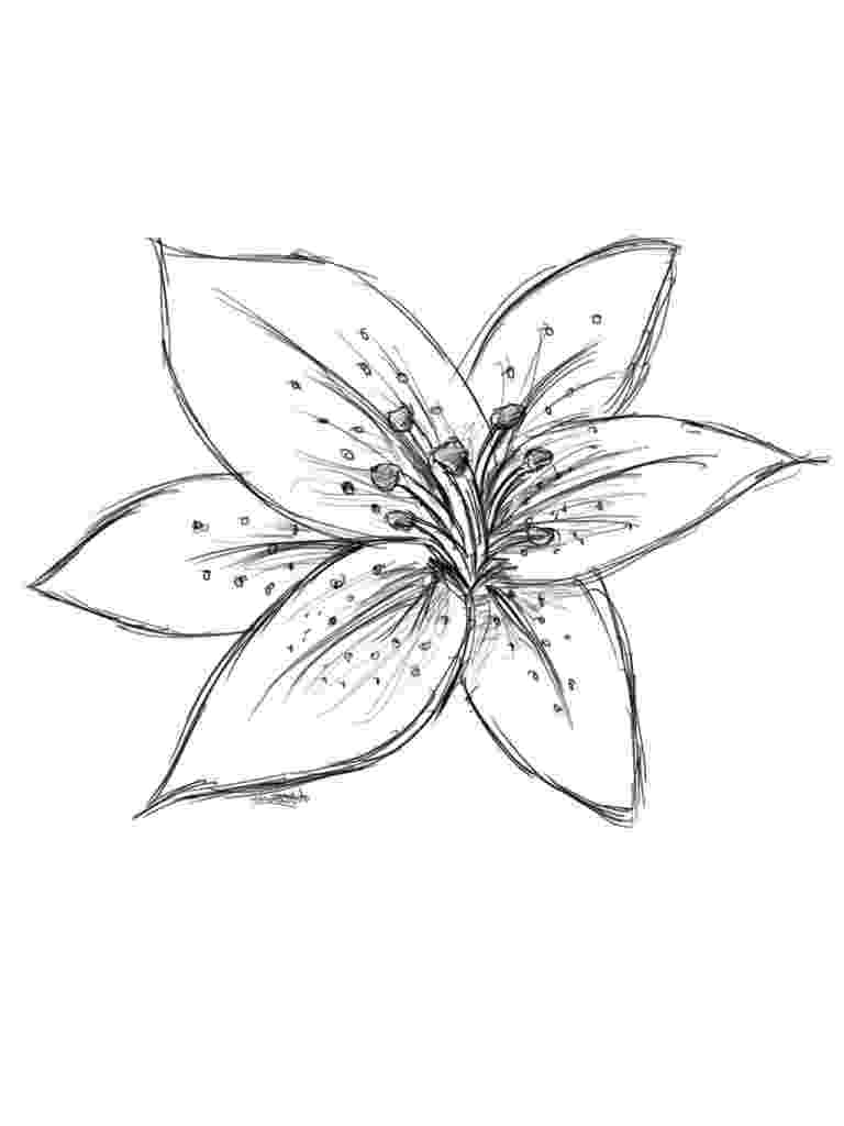 lily sketch lily flower drawing pictures at getdrawingscom free for sketch lily