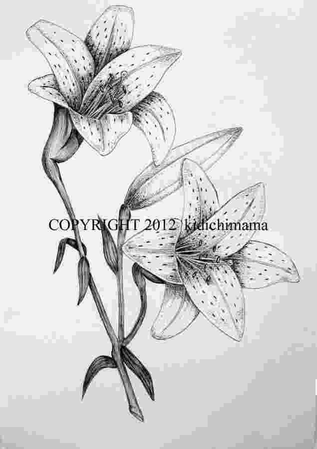 lily sketch lily flower tattoo stencil tattoo lily sketch lily
