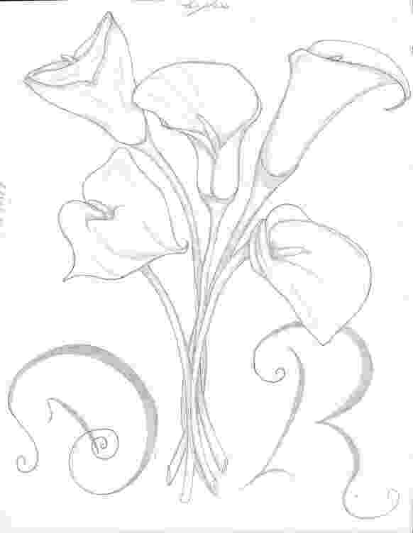 lily sketch lily royalty free stock images image 16317999 lily sketch