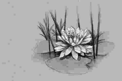 lily sketch quotcontour of blooming lily isolated over white background lily sketch