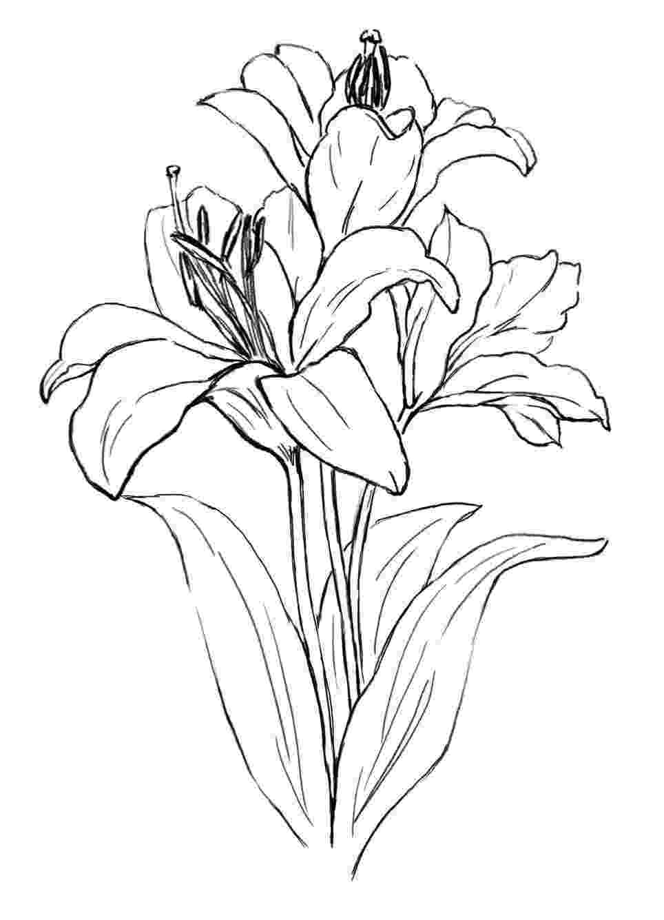 lily sketch realistic flower drawing at getdrawings free download lily sketch