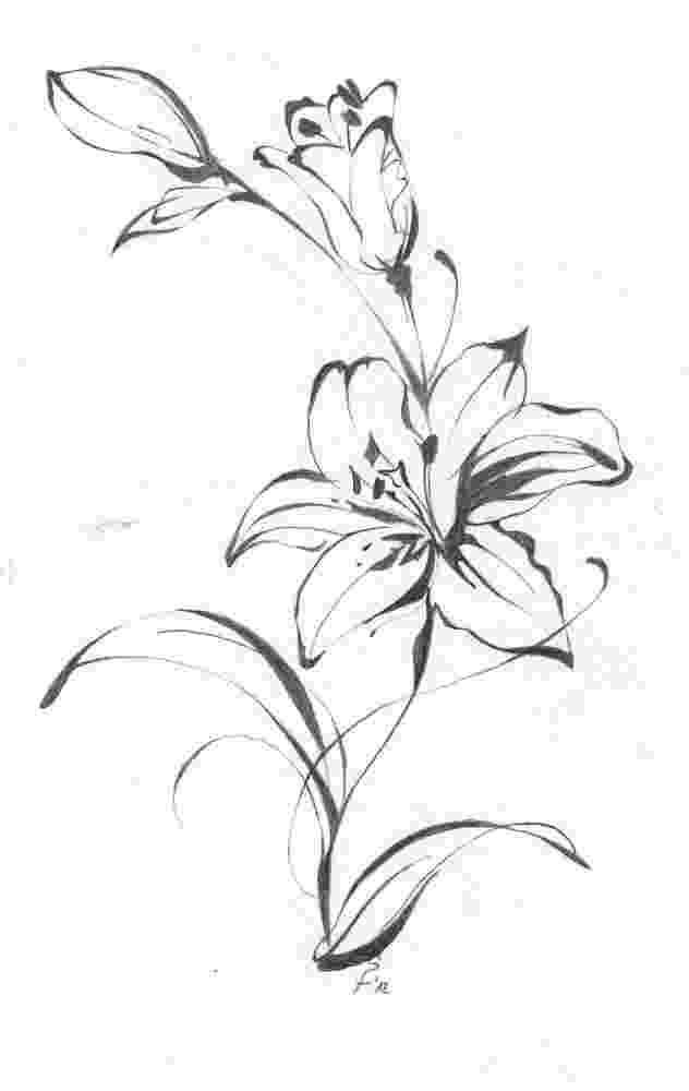 lily sketch sketch of flowers lily isolated on white background vector sketch lily