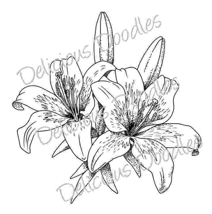 lily sketch tiger lily flower drawing at getdrawingscom free for lily sketch